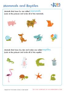 Mammals and Reptiles Worksheet