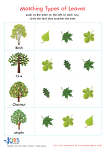 Different Types of Leaves Worksheet