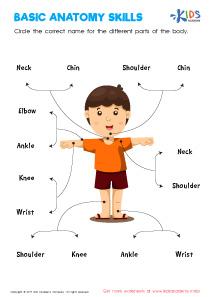 Basic Anatomy Worksheet