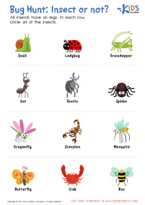 Bug Hunt: Insect or Not