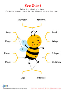 Delightful Bee Anatomy Worksheet