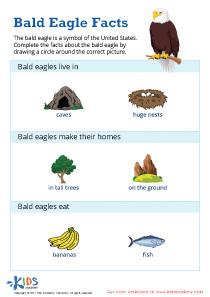 Bald Eagle Facts Printable Worksheet