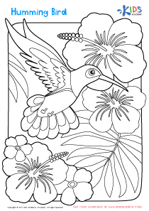 Worksheet: humming bird coloring page