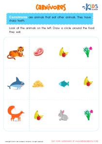 Carnivorous animals worksheet