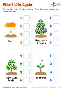 Plant life cycle worksheet