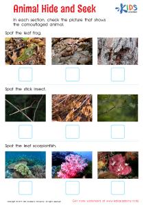 Animal hide and seek worksheet pdf