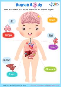 Internal organs worksheet for grade 2