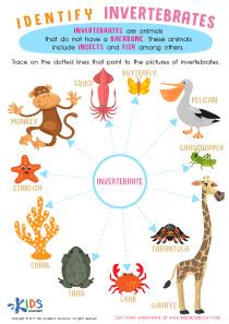 Invertebrates Worksheet for Grade 3