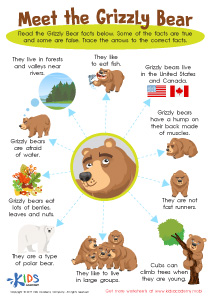 Grizzly Bear Facts Worksheet for 3rd Graders