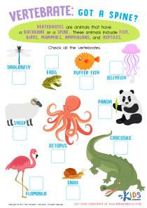 Vertebrates Animals Worksheet for 3rd Grade