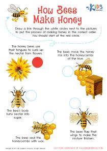 Honeybee worksheet for 3rd grade