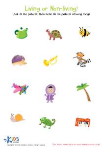 Sorting Worksheets for Kids